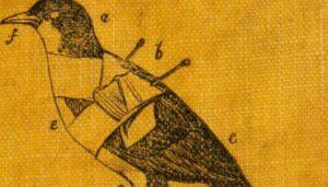 tassidermia uccello