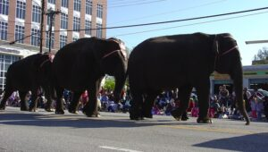 elephants-on-parade