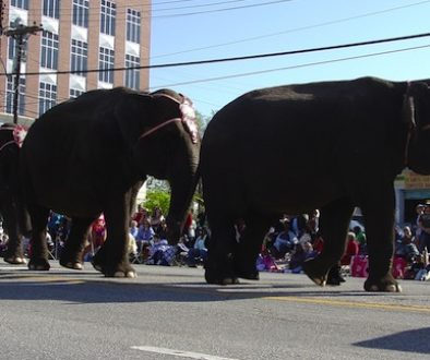 elephants-on-parade