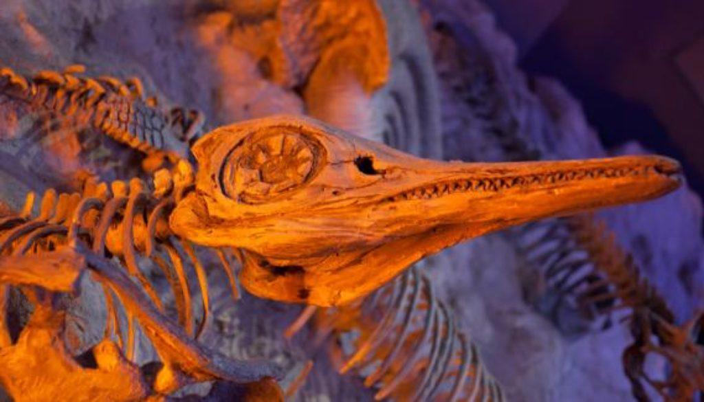 prehistoric-fossil
