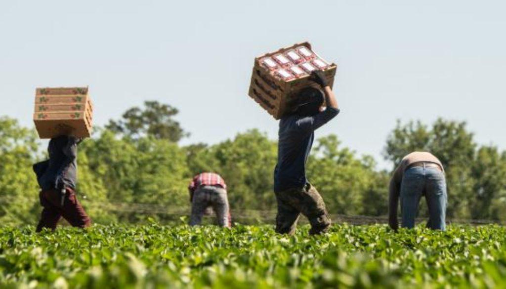agricolture usa