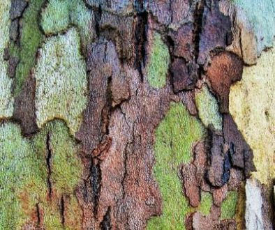 bark-patches