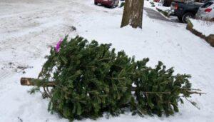christmas tree cut