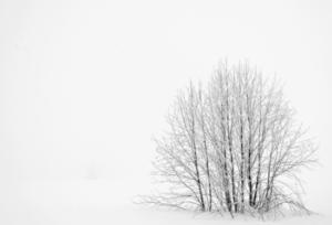 invernoslider
